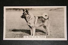 Elkhound   Champion   Vintage  Photo Card # VGC