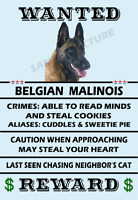 Belgian Malinois Dog Wanted Flex Fridge Magnet 6x4 inches