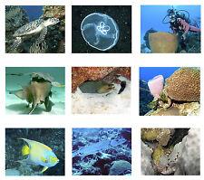 "Tropical Fish Photo Quilt Square Kit  8"" x 10"" Photos"
