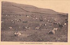 MONTS D'AUBRAC 10362 une vacherie