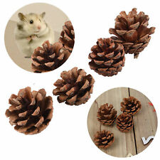 4x Pet Hamster Chews Play Toy Pine Cone Ball Teeth Grinding Rabbit