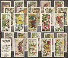 BADSHAH TEA-FULL SET- BUTTERFLIES & MOTHS (25 CARDS) - EXC+++