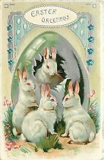 Easter Greetings Postcard; Red Eyed Albino Rabbits come out of egg & eat Grass