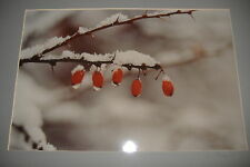 Ralph Gibson Original Signed Photograph Still Life Berries on a Branch Winter