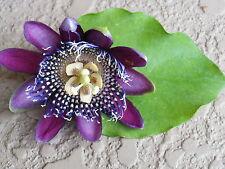 Passiflora 'Preciosa'