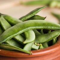 Cascadia Sugar Snap Peas Seed Ships Fast! US Seller