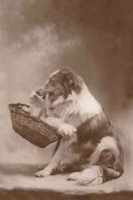 Antique Photo Border Collie Dog w/ Kitten  - 8 LARGE New Blank Note Cards
