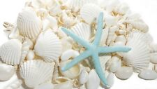 WHITE SHELLS, MIX OF 400 GRAM ASSORTED WHITE SHELLS  WITH FREE STARFISH