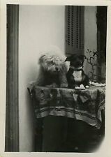 PHOTO ANCIENNE - VINTAGE SNAPSHOT - ANIMAL CHIEN TABLE DRÔLE GAG - DOG FUNNY