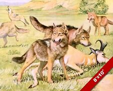 TIMBERWOLF WOLF & COYOTE HUNT & KILL DOG ART PAINTING PRINT ON REAL CANVAS