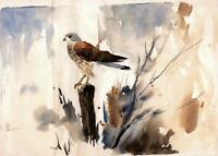 FRED MARSHALLSAY Watercolour Painting BIRD ON POST STUDY - IMPRESSIONIST