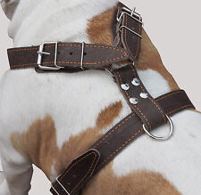 "Great Dane Cane Corso Mastiff Real Leather Dog Harness 35""- 40"" chest size"