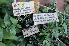 Tomato Seeds Set #6 - Nine Rare Kinds - 450 seeds! dark galaxy tomato included