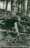 Ansichtskarte Sächsische Schweiz Schlangenkiefer am Gr. Bärenstein (Nr.9029)