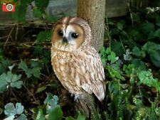TAWNY OWL, LIFE SIZE. Ultra Realistic. Nice Home or Garden Ornament. Vivid Arts