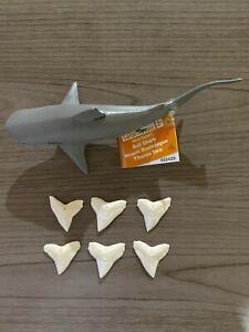 "Set of (6) 1 1/8"" Bull Shark Teeth with Safari LTD Replica toy shark kit"