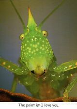 Rhinoceros Conehead Katydid I Love You Funny Insect Greeting Card - Not Postcard