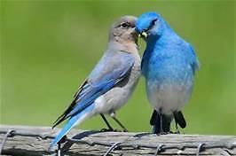 Bluebirds House