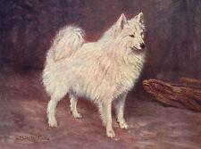 SAMOYED OLD IMAGE NAMED DOG ON GREETINGS NOTE CARD