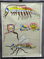 24x36 Insect Identification Educational Science Chart Poster