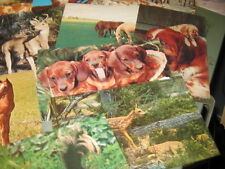 Vintage Postcards - PA - lot of 14 - wildlife - Williamstown, Millersburg