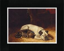ENGLISH BULLDOG AND SLEEPING CAT LOVELY VINTAGE STYLE DOG ART PRINT READY MATTED