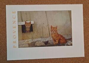 Modern Cat Photo. 2 orange striped cats, village of Luberon, Provence. France.