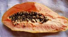 Carica Red Lady Papaya 15 seeds