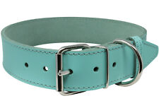 "Dog Collar 19""-22.5"" neck 1.5"" wide High Quality Genuine Leather Cyan"