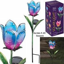 Blue & Rosa Tulipano Fiore Solare Luce Giardino Paletto Creekwood Regal Art & Gift Box