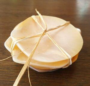 Mop sea shells, 6, natural, polished, display, tableware, gift, beach decor