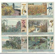 S 1290 - LIEBIG - COME I Blumen Zeichnen Insekten - ( Ita)