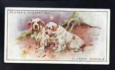 Clumber Spaniels 1925 John Player Cigarettes Tobacco Dogs #34 Vg-Ex