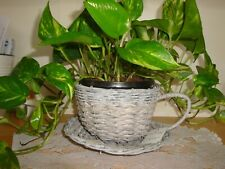 Reduced Wicker Cup & Saucer Planter-(Plant Not Included)-Garden-Home-Kit chen