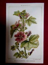 Carte Botanique - MAUVE SYLVESTRE -  Mme Cresty pinx.t - E. Dufrénoy - HACHETTE