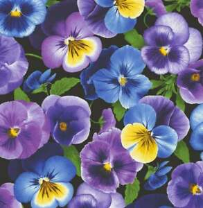 PANSY PANSIES Floral Cotton Quilt Fabric - Half Yard Cut / Yardage