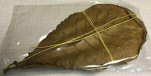 10 Seemandelbaumblätter 10cm - 15cm natürlich gereift+getrocknet TOPQualität