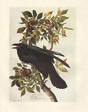 VINTAGE JOHN JAMES AUDUBON BIRD PRINT ~ COMMON RAVEN
