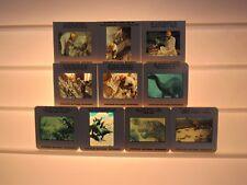 Lot 10 Vintage Vacation Souvenir Slides-Dinosaur National Monument-Utah-1970's