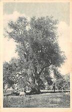 BR44674 Kabylie oliever pres de tizi ouzou algeria