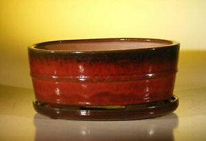 Parisian Red Ceramic Bonsai Pot - Oval Professional Series with Attached Humi...