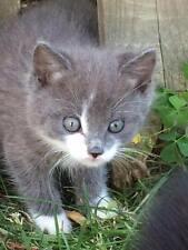 SPONSOR RESCUED KITTEN GREY FERAL CAT RESCUE FOOD VET Rec his COLOR PHOTO