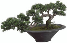 Bonsai-Bäume