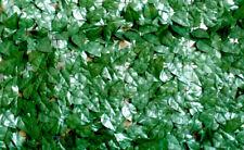 VERDELOOK Sempreverde®Point Siepe artificiale 1x3m foglia pitosforo decorazioni
