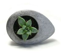 Concrete Drop Planter Flower Pot Handmade Home & Garden Decor Natural Gray