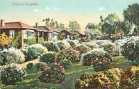 California Bungalows~Fantastic Flower Bushes c1910 Postcard