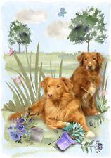 "Nova Scotia Duck Toller Dog (4"" x 6"") Blank Card/ Notelet Design By Starprint"