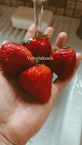 100 Strawberry Seeds 🍓 Homegrown Edible Garden Fruit Organic Sweet NonGMO Berry