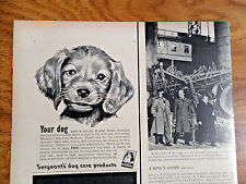 1950 Sergeant's Dog Care Ad  Irish Setter Puppy
