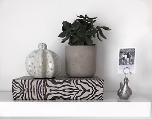 Zebra Storage Book Box Slight Seconds